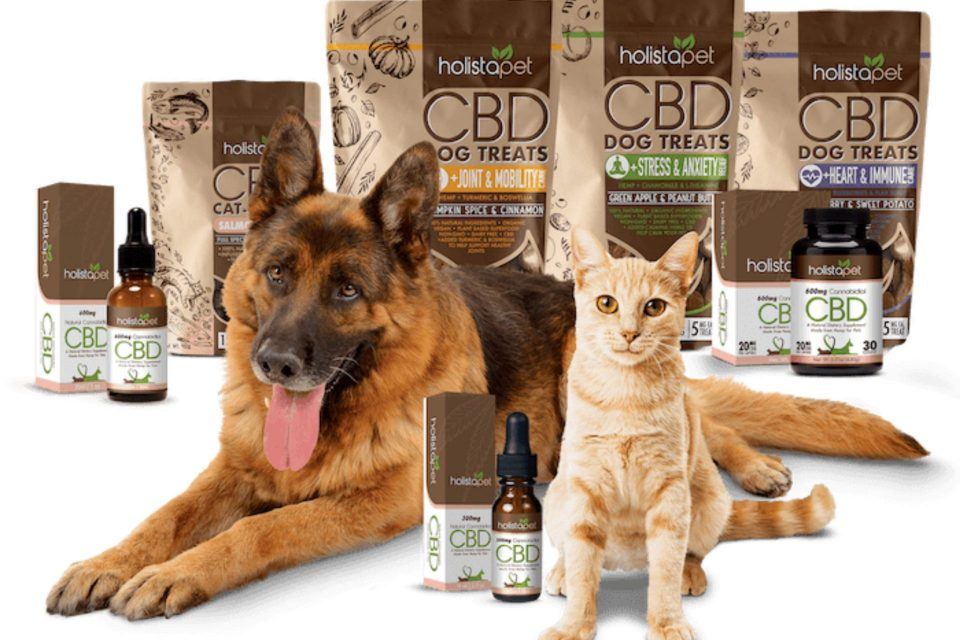 HolistaPet CBD Review [2021] - Top Rated for Pets